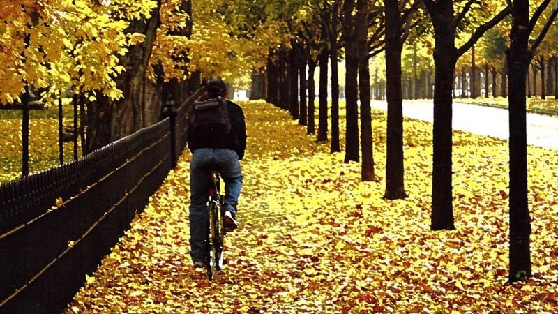 header_autumn05.jpg