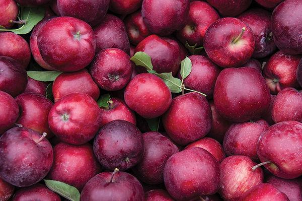 http://magazine.nd.edu/assets/120364/news_apples.jpg