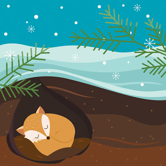 Carol Hibernating Fox