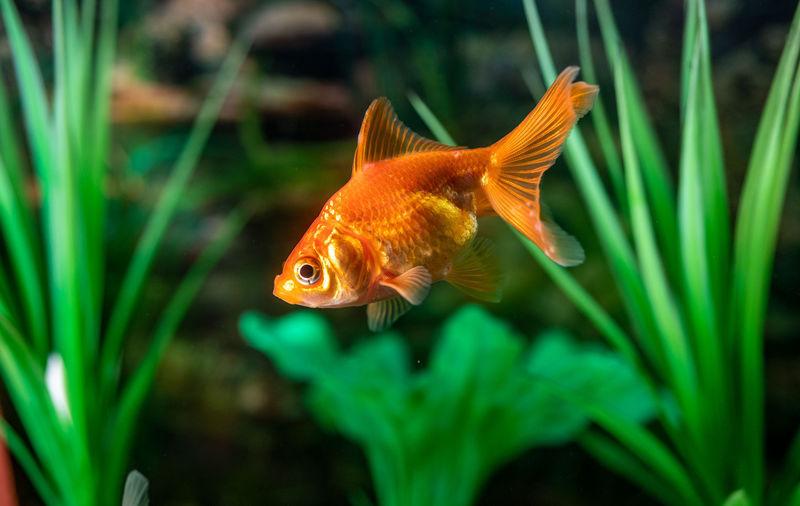 01 Fish Full