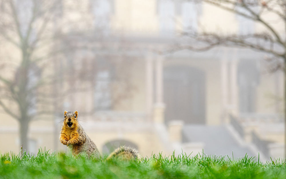 Squirrel on Main Quad